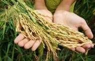 Food security and self-reliance at center of China's agriculture plans
